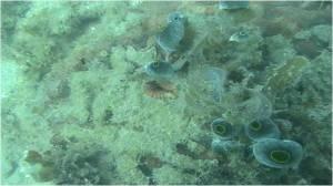 Sedimentasi pada terumbu karang